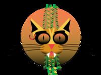 The brazilian street cat