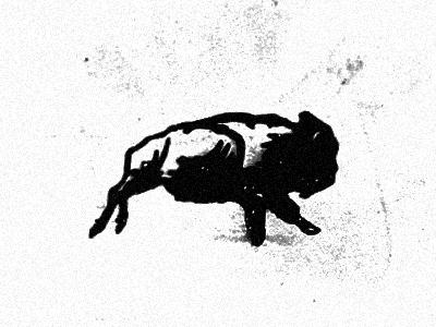 buffalo  no tail