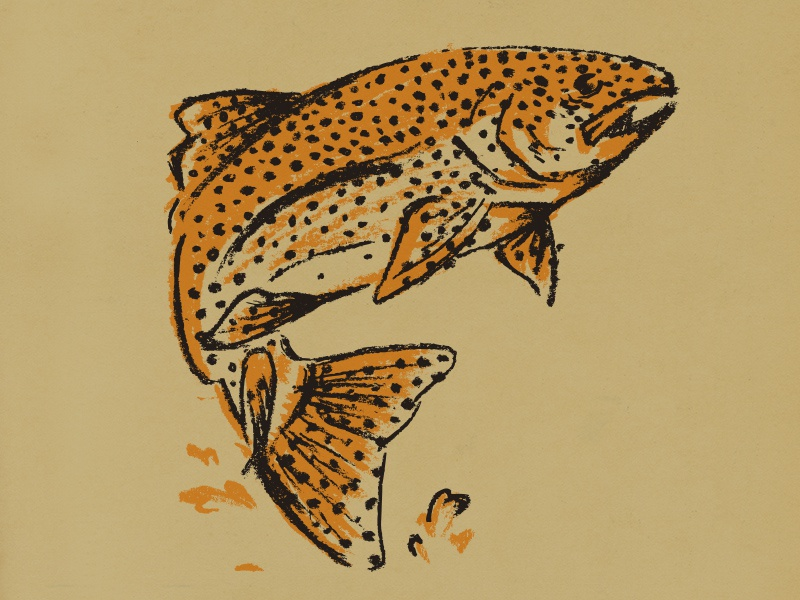 Brown Trout charcoal apparel fishing texas illustration fish trout