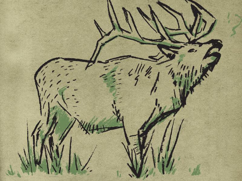 Elk charcoal elk texas shirt illustration