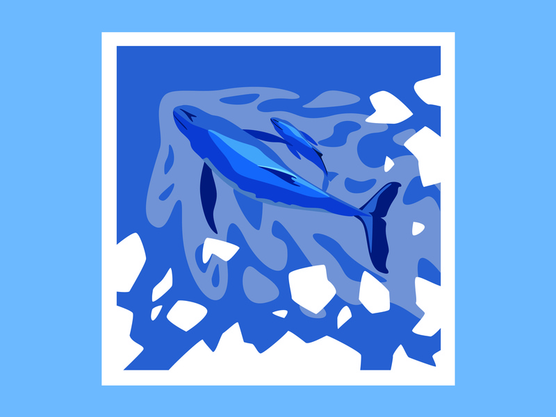 the whale wild sea ice animal draw whale antartic adobe illustrator illustration
