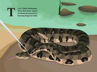 Timber Rattlesnake Endangered Poster poster graphics animal endangered animal endangered illustration new jersey snake rattlesnake timber rattlesnake
