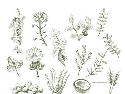 Plant Illustrations / 植物のイラスト