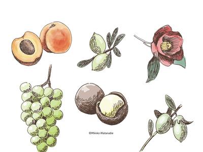 flower&fruit Illustrations / 花と果実のイラスト