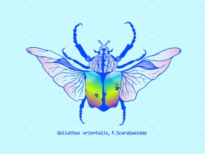 Goliathus bug