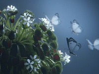 Butterfly Venus Flytrap Close Up