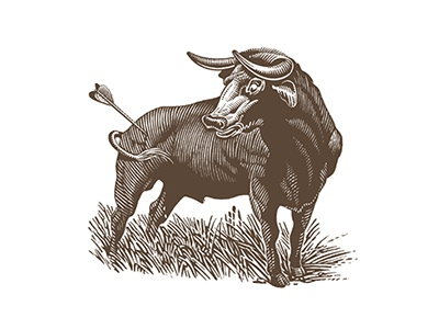 Bull's-eye arrow bull roger xavier illustration scratchboard