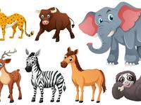 Wild-animals
