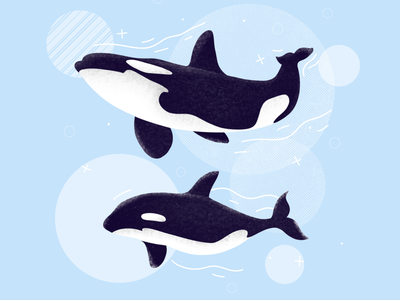 Killer whales drawing creative etheric sea family nature enviroment ocean killer whale animals animal clean procreate illustration