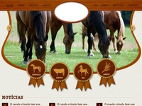 Home Horses Breed