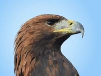 Polygonal Golden Eagle
