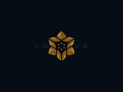 Lotus lotus flower magnolia petals gold jewels flower lotus design brand emblem identity branding mark logo cajva