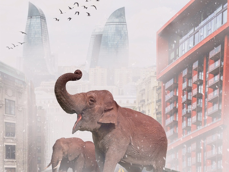 Free the animal 🐘 Elephants on the bridge. poster azerbaijan baku building postcard illustration logo mockup photoshop design