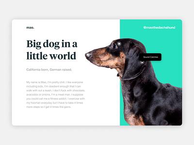 Mao the Dachshund german font serif sans serif clean simple cute big dog dachshund