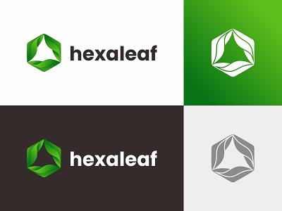 hexaleaf leaf logo leaf hexaleaf hexagon logo hexagonal hexagon branding vector brand symbol design logo