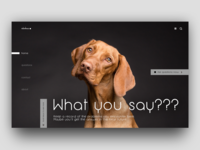 What you say???  - web design