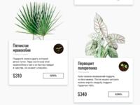 Gallery. Online seeds store