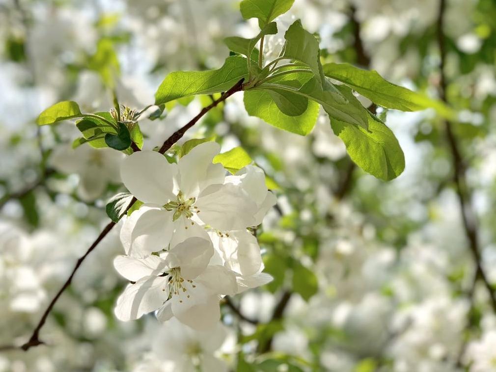springtime 插图 应用 springtime