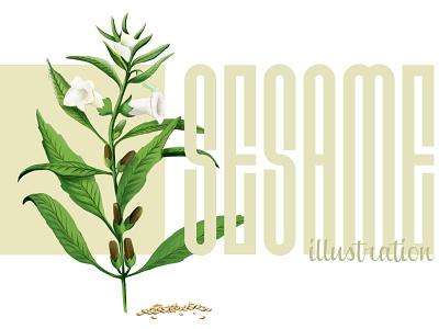 Sesame Illustration realistic photoshop wacom intous pro wacom 2d 2d art plant painting drawing digital digital drawing illustration art sesame