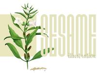 Sesame Illustration