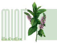 Mint Illustration
