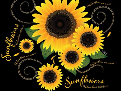 Bright And Sunny Sunflowers Design By Deborah Goschy On Dribbble