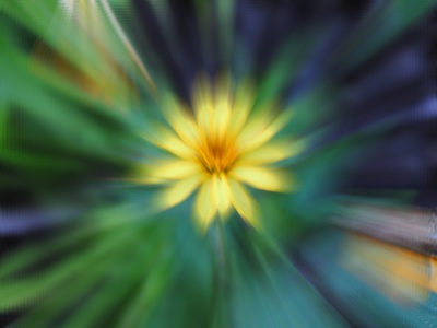 Yellow Zoom Blur fabricprint mamagoose26 deborah goschy graphicdesign nikon d-3000 photography photograph zoom blur blur blossom bloom flower