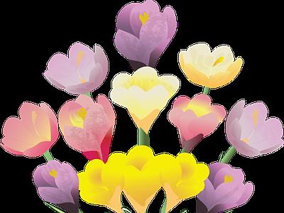 Spring Bouquet digitalart drawing springbouquet crocus deborahgraphix vector redbubble pattern adobe illustrator fabricprint illustration vectorillustration mamagoose26 graphicdesign deborah goschy