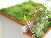 Prairie on the roof