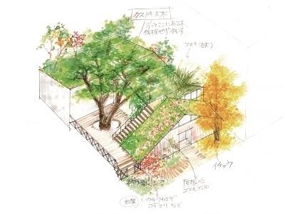 Ginkgo Tree house plantshouse landscapearchitecture greenarchitecture