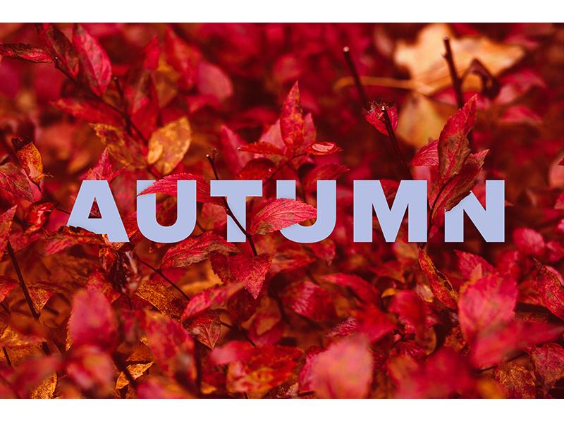 Typography - Seasons graphic design seasons nature typography