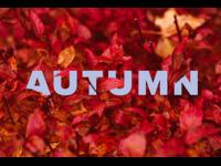 Typography - Seasons