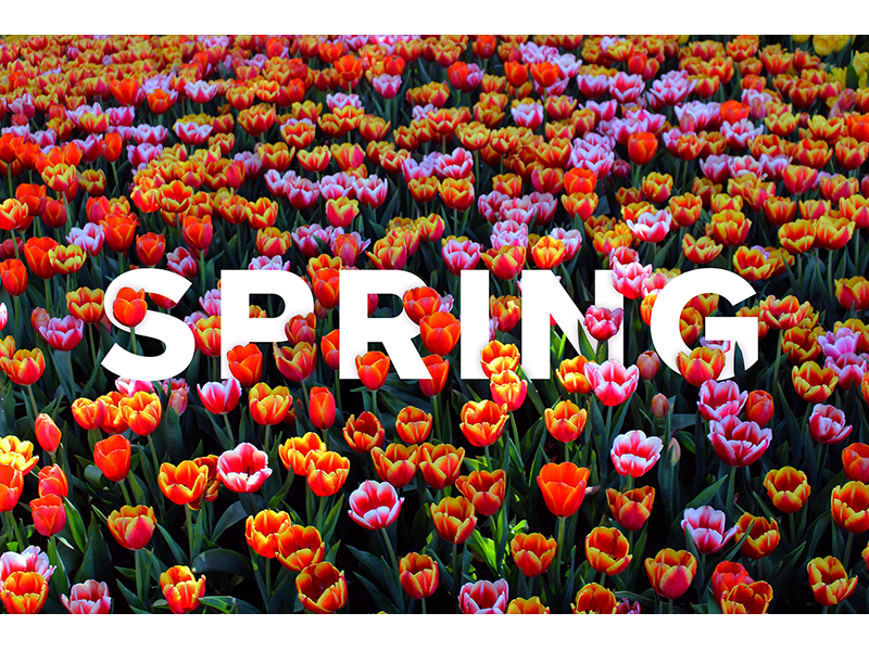 Typography - Seasons 3 colorful flowers spring seasons typography graphic design