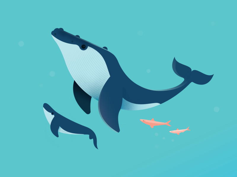 Having a whale of a time animals procreate vector australia design illustration nature ocean sealife whale
