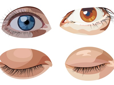 Vector set of eyes in graphic style vectors male female man guy woman human anatomy organic lashes eyelashes sight eyeball sleep up close open vector eyes eye