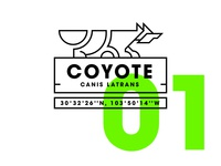 Coyote - Day 01