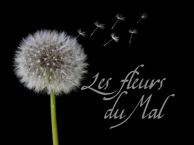 Les fleurs du Mal - Book Cover dandelion black cover book fleurs du mal custom type caligraphy typogaphy motion graphics book cover