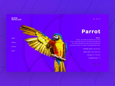 Bird Species- Parrot