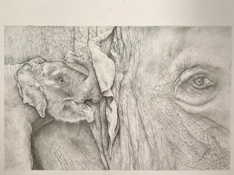 Elephants sketch
