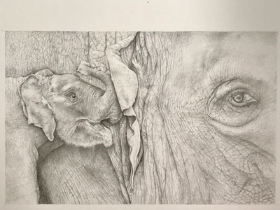 Elephants sketch