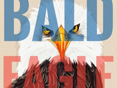 BALD EAGLE |bôld ˈēɡəl| adobe illustrator draw vector vector art olbap design olbapdesign olbap illustration bald eagle birds of prey eagle
