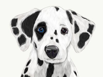 Illustration: The Dalmatian  /dalˈmeɪʃ(ə)n/