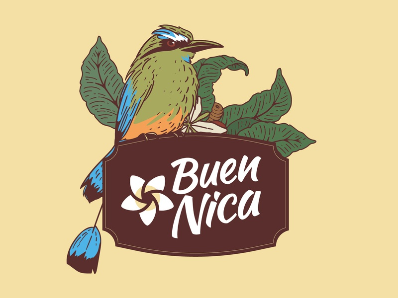 Buen Nica - Illustration logo vector brand design tipo-tuani plumeria coffee bird illustration