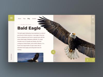 Animal blog UI/UX Design : Web