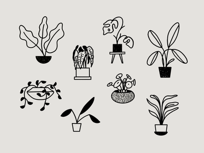Paperless Illustrations: Plants illo ipad procreate handdrawn plants fort worth illustrator illustration design