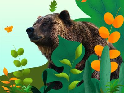 bear photoshop procreate illustration