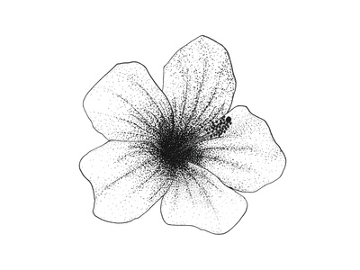 Tropical Plant Series: Hibiscus