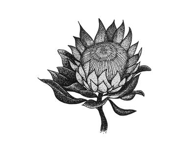 Tropical Plant Series: King Protea