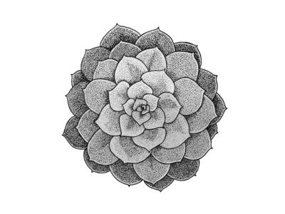 Tropical Plant Series: Succulent succulent plants tropical stippling penandink illustration drawing