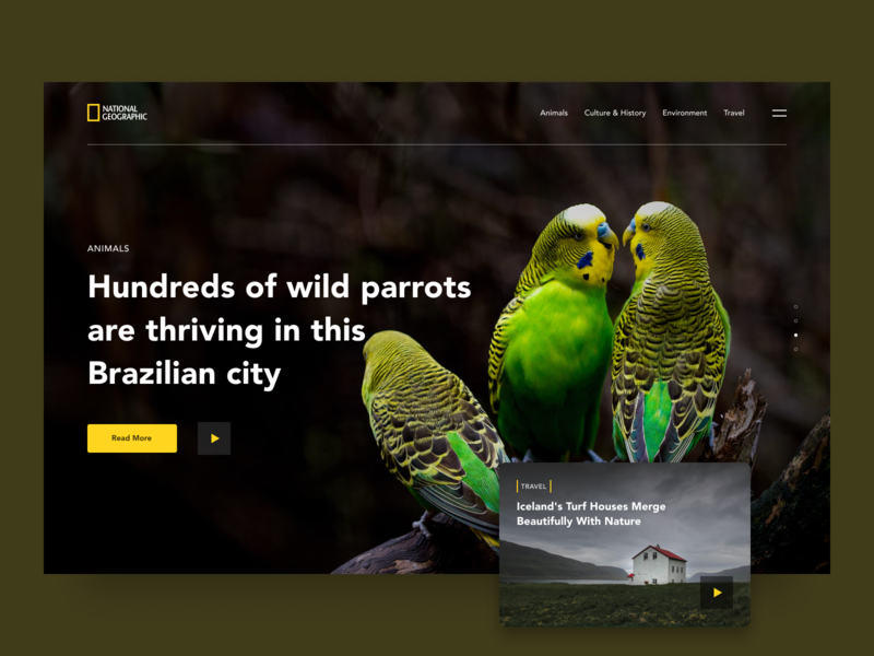 National Geographic Website Redesign website wildlife wild animal redesign wild national geographic ux ui design simple web